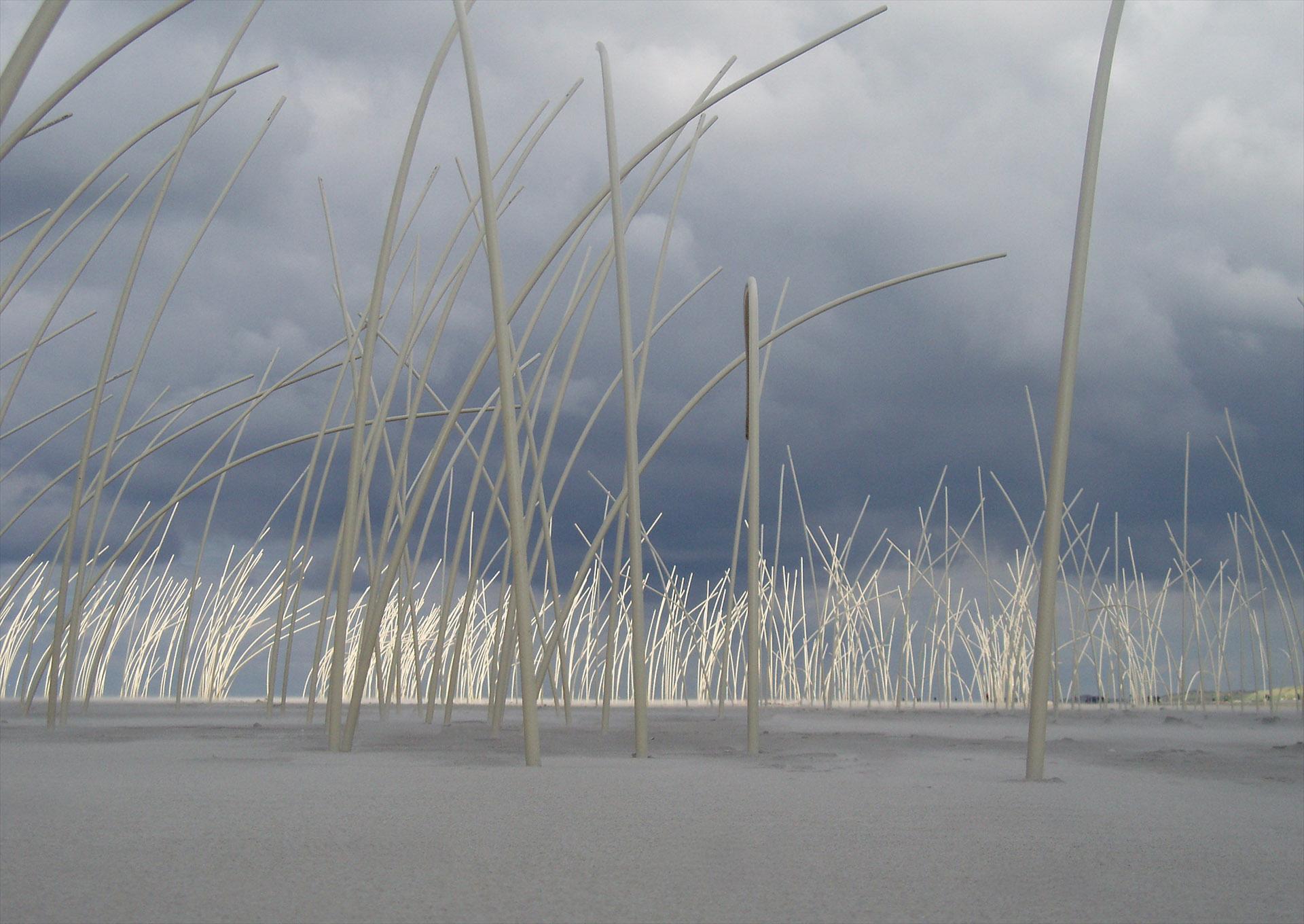 Dansendwoud – 2005